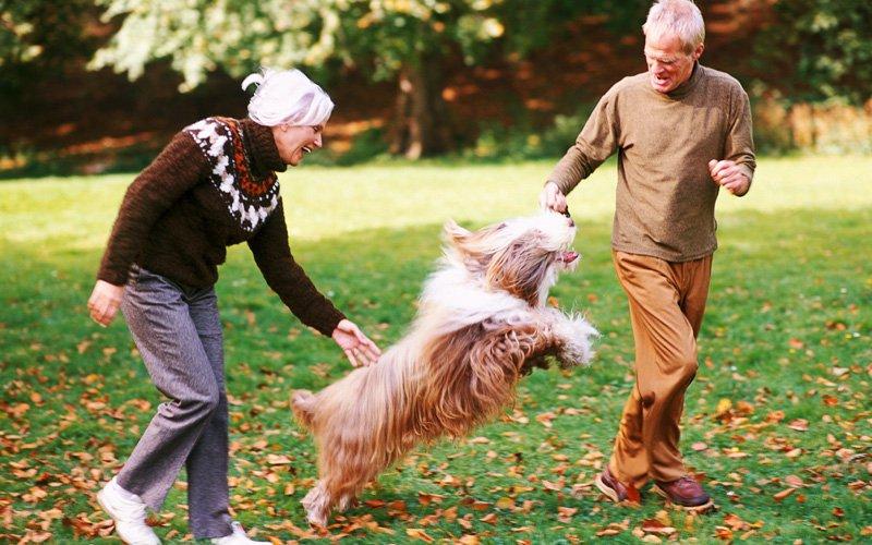 Канистерапия — благотворное влияние собак на здоровье человека