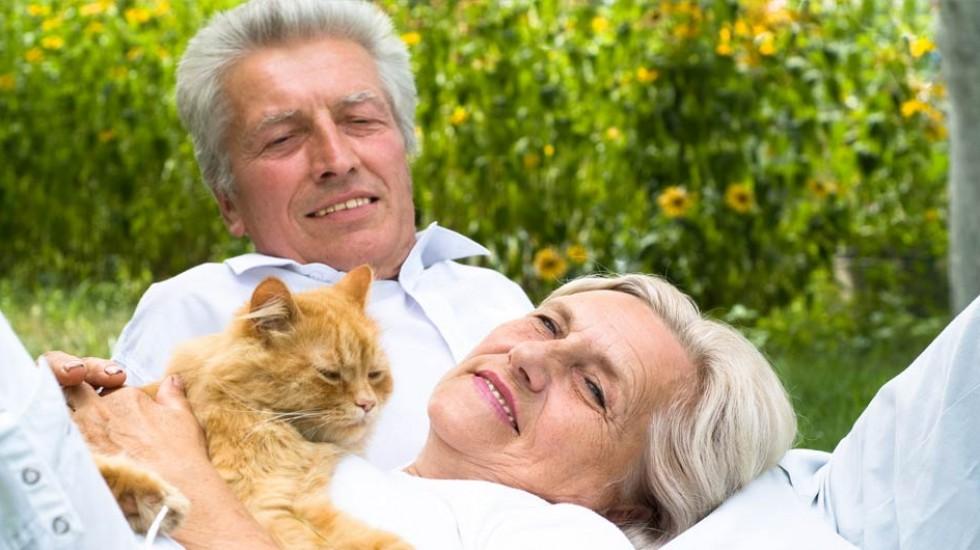 Фелинотерапия — терапевтический эффект общения с кошками